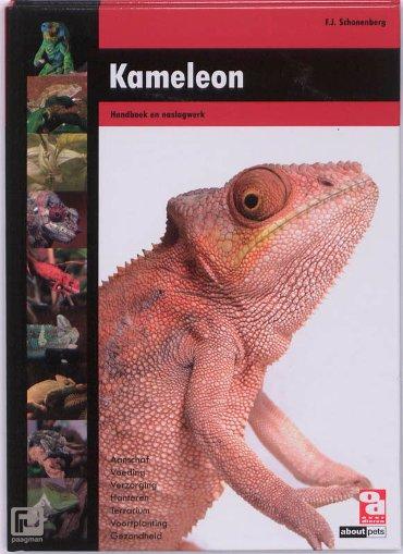 Kameleon - Over Dieren