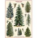 Cavallini & Co kerst poster vintage - Christmas Tree