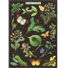 Cavallini & Co vintage poster - Caterpillars & Butterflies